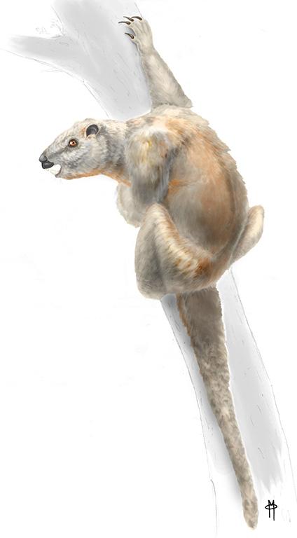 Plesiadapis tricuspidiens