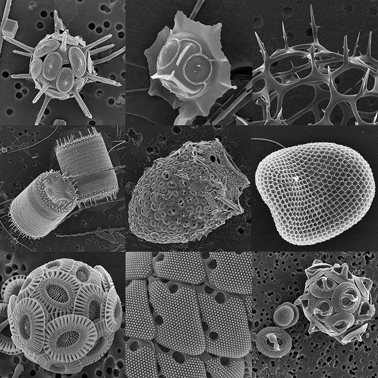diversite-morphologique-web